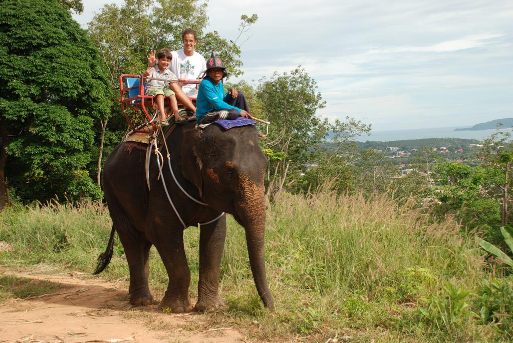 maus-tratos-sontra-animais-solanomundo-elefantes